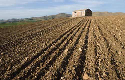 Imu agricola: Tar del Lazio dà ragione al comune di Belpasso