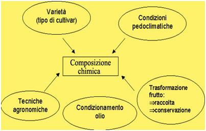 composizione chimica olio3