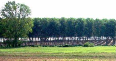 Demanio, ecco i terreni agricoli in vendita o in affitto nel corso del 2017 con Terrevive