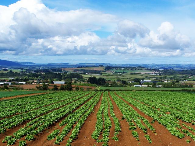 Il sistema fiscale in agricoltura
