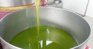 Ottenere un olio extravergine di oliva di qualità