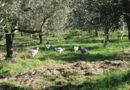 Agroselvicoltura, attività multifunzionale di successo