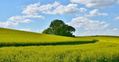Imu agricola, esenti i coltivatori e gli imprenditori già in pensione