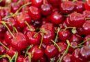 Le Drupacee siciliane scendono in campo: è l'ora di ciliegie, albicocche, pesche e susine
