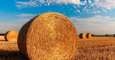 Decreto Sostegni bis, 2 miliardi per l'agricoltura: tutte le misure