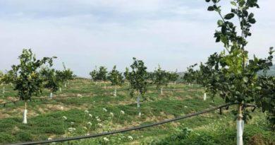 Arriva in Sicilia Herbeeside: sistema di sanificazione ed eco-diserbo a base di additivi vegetali