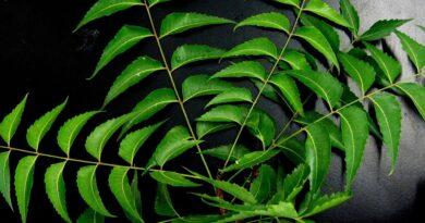 Olio di neem in agricoltura biologica: insetticida naturale
