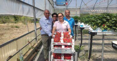 Combattere insetti nelle colture con… gli insetti: l'esperienza di un'azienda produttrice di fragole