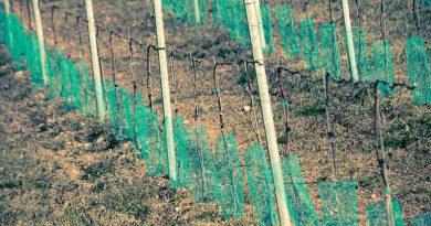 Le nuove frontiere della frutticoltura protetta